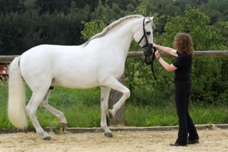 pferde zusammenhang ausbildungsskala